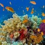 Nuova Caledonia: vacanze attive